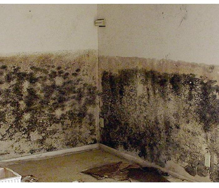 Mold Remediation Got Mold in Talbot / Dorchester County? Better call SERVPRO